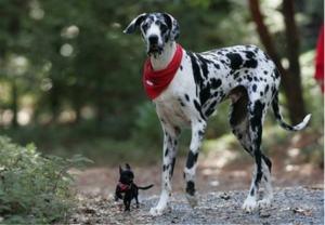 big-dog-small