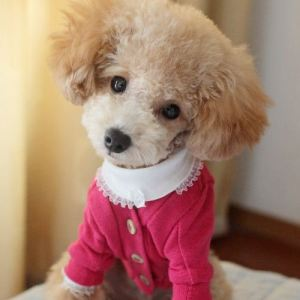Free-Shipping-2013-Lefdy-New-Big-Small-Pet-Dog-Sweater-for-Autumn-Winter-Coats-Apparel-Personalized
