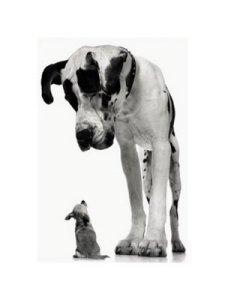 tim-flach-big-dog-little-dog