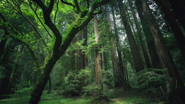 1133472-1920x1080-beautiful-forest-454hete.jpg
